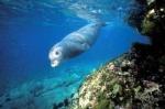 La foca monaca_Page_1_Image_0006